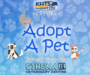 Adoptable Pet - Cinema Vet